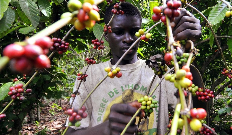 Tìm hiểu quá trình sản xuất của cà phê Specialty