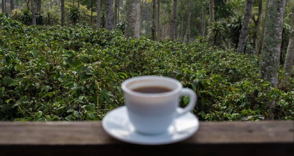 """""""Cái nôi"""" cà phê và cách tiêu thụ hiệu quả"""