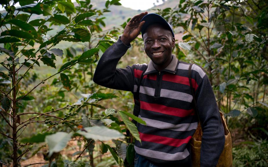 Vượt qua thách thức khi tìm nguồn cung cà phê từ Cộng hòa Dân chủ Congo