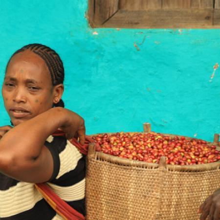 Giải quyết bất bình đẳng thuộc địa trong ngành cà phê