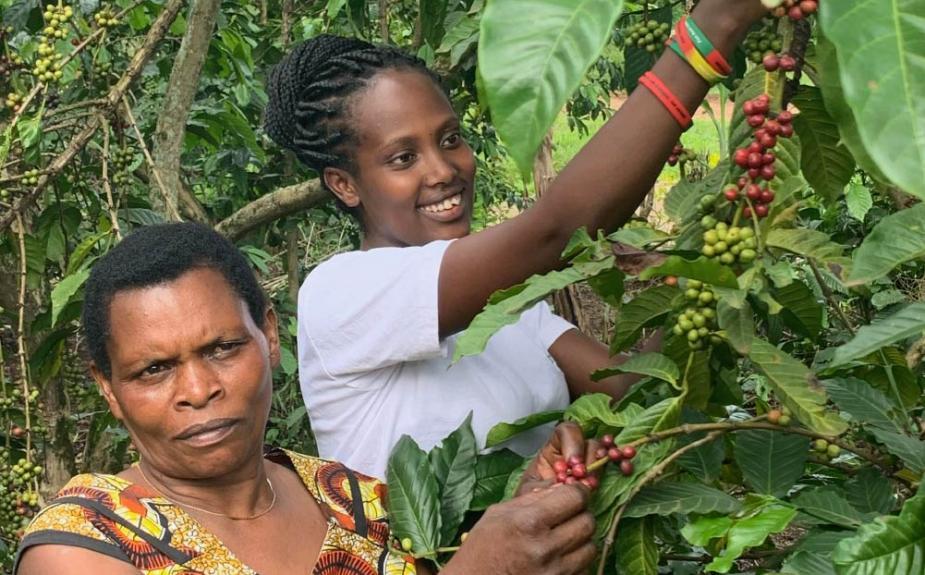 Khám phá mức tiêu thụ cà phê ở Uganda